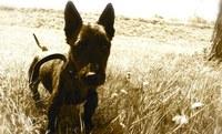 Majitelům neočipovaných psů hrozí sankce