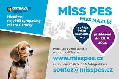 Hledá se Miss pes a mazlík