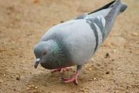 Informace k ptačí chřipce