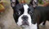 Majitelé již načipovaných psů pozor