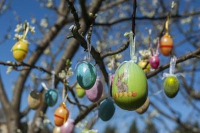 Ozdobíme Velikonoční stromky