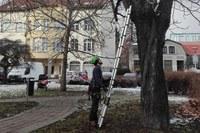Probíhá kontrola stavu stromů v obvodu