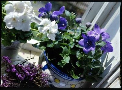 Zapojte se do soutěže Kouzlo květů