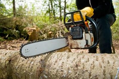 Změna v povolování kácení stromů a dřevin